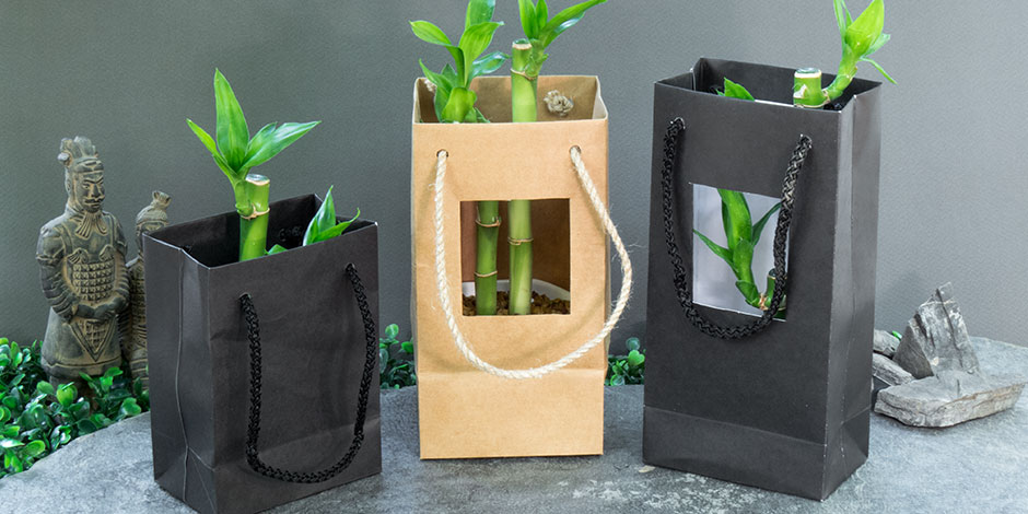 Lucky Bamboo Feng Shui  Meaning and Use  The Spruce